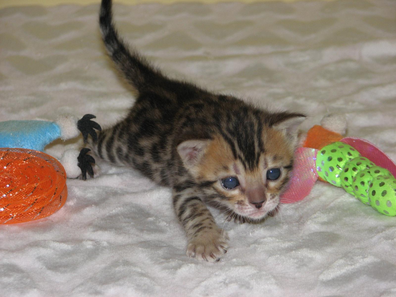 Cleo & kittens 9 26 17 004