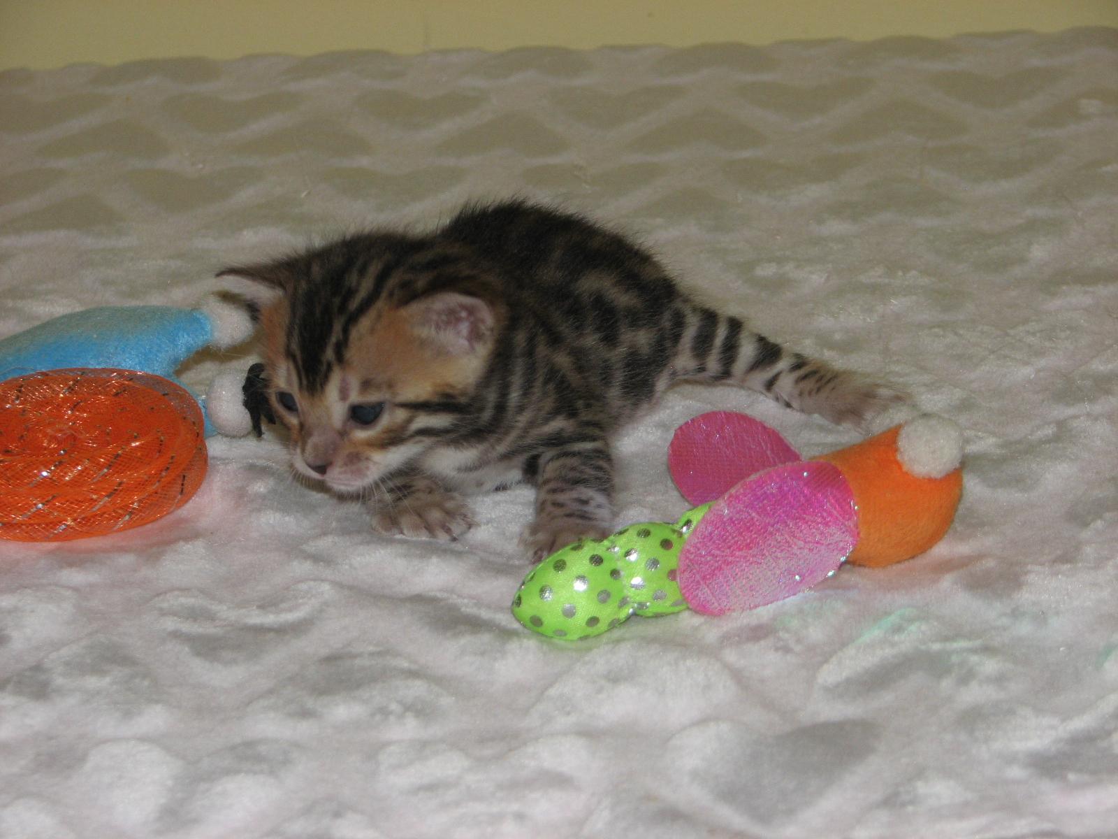 Cleo & kittens 9 26 17 009