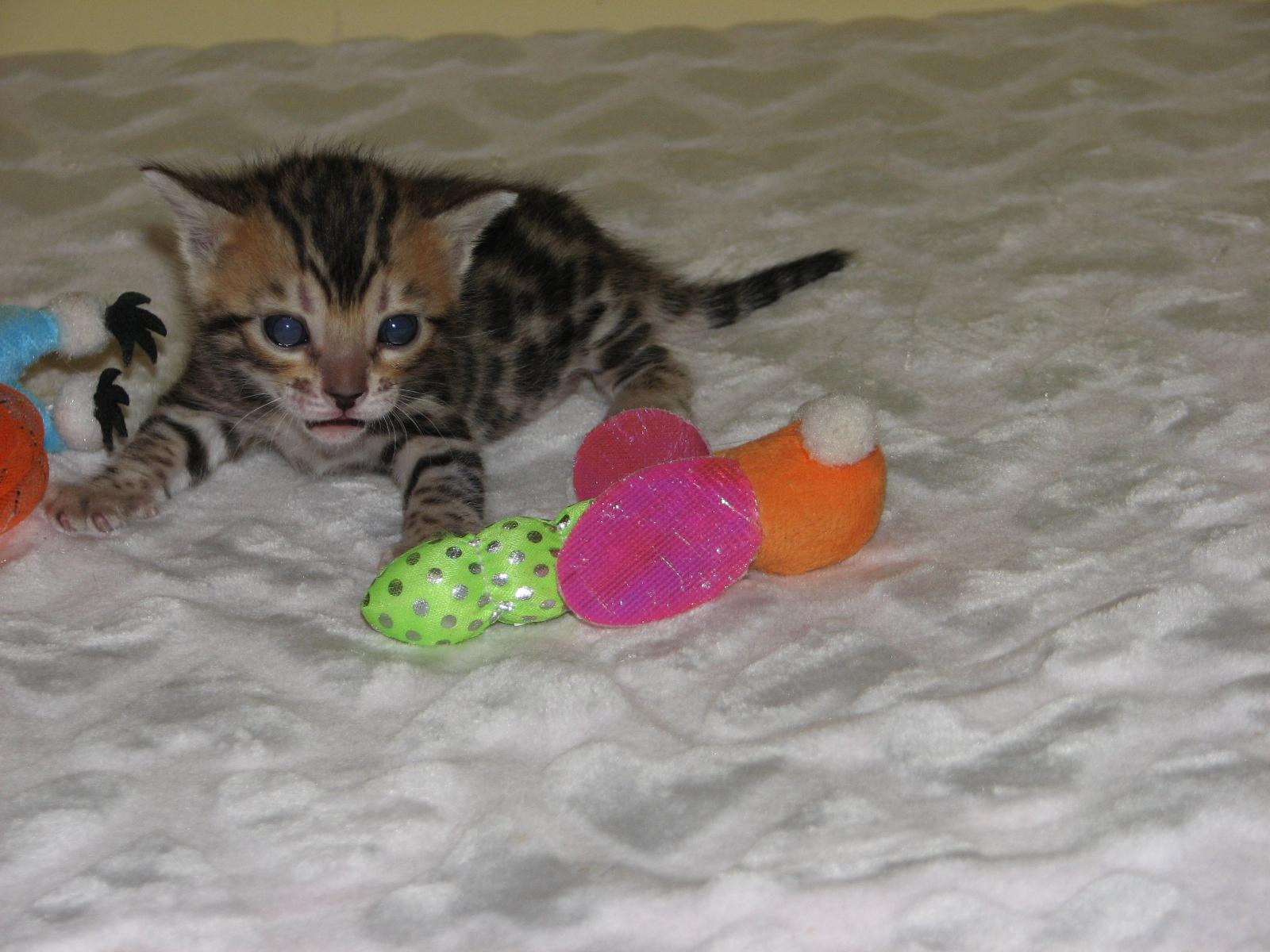 Cleo & kittens 9 26 17 011