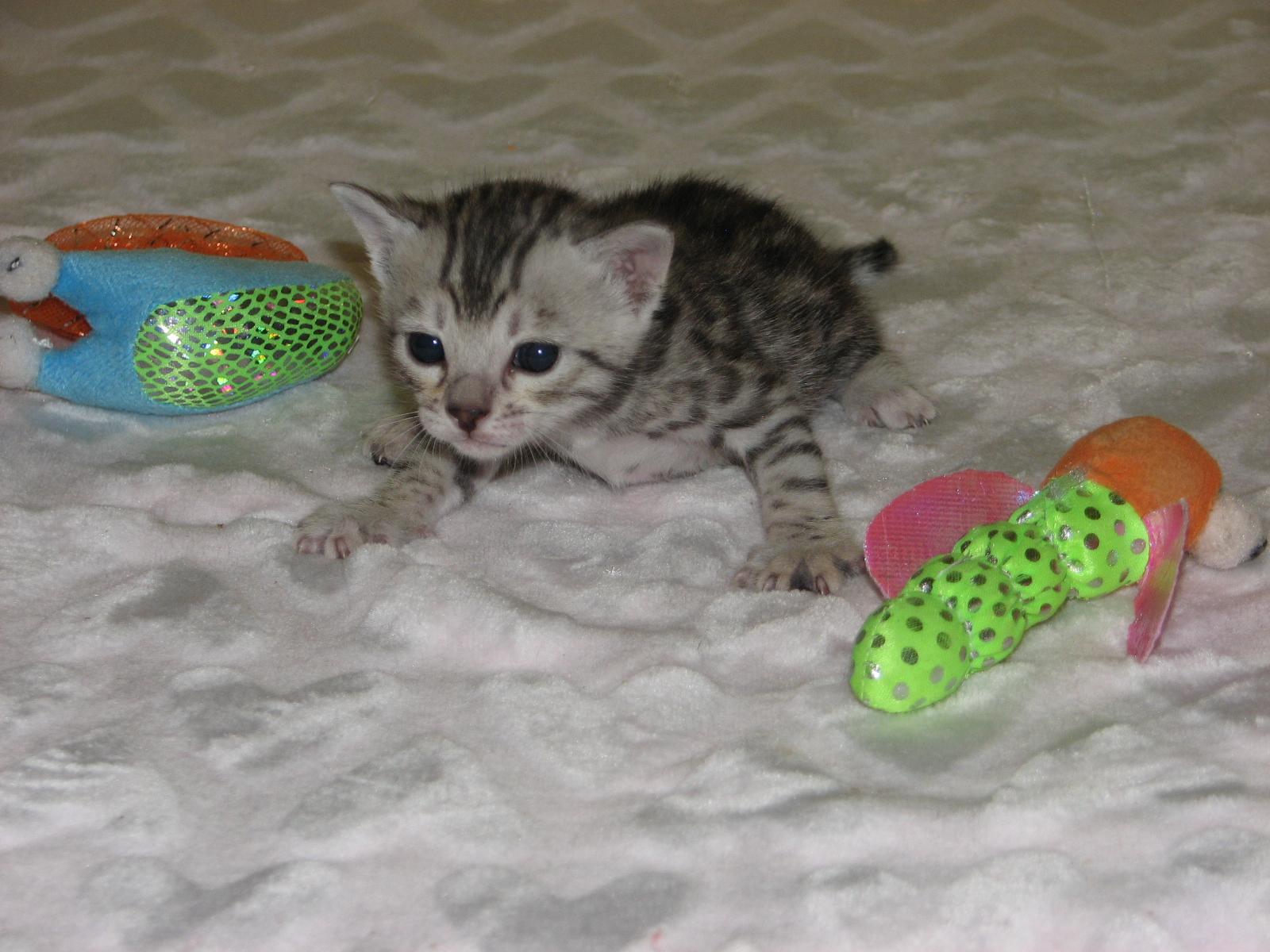 Cleo & kittens 9 26 17 026
