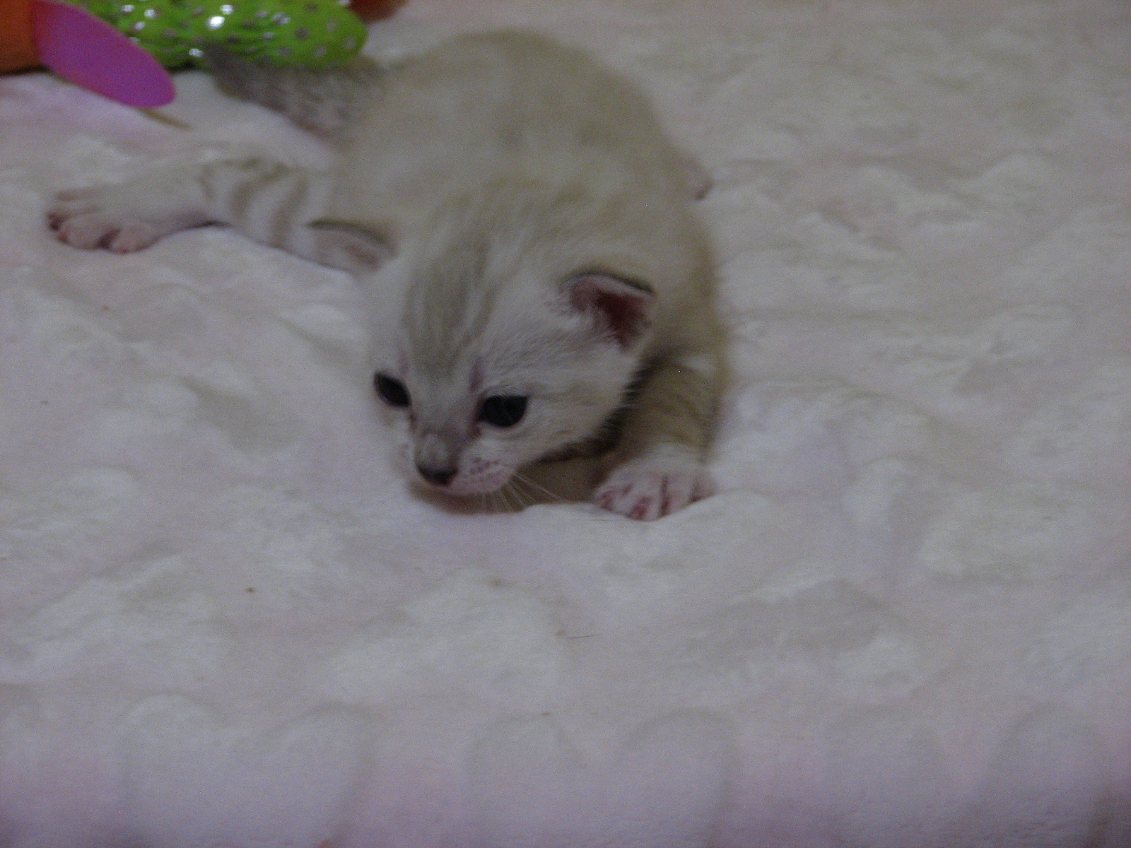Cleo & kittens 9 26 17 045