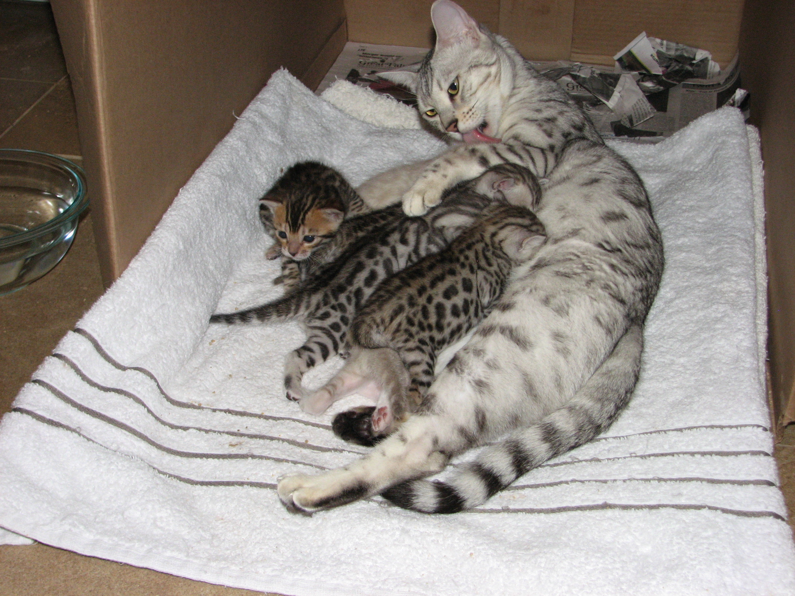 Cleo & kittens 9 26 17 058